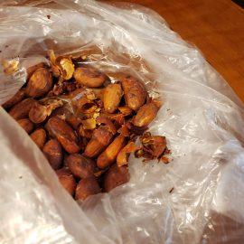 台湾カカオでチョコレート作り